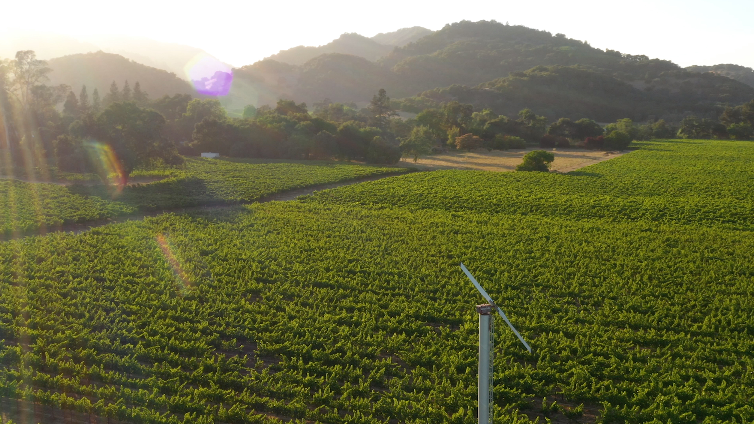 vineyard overview video cover