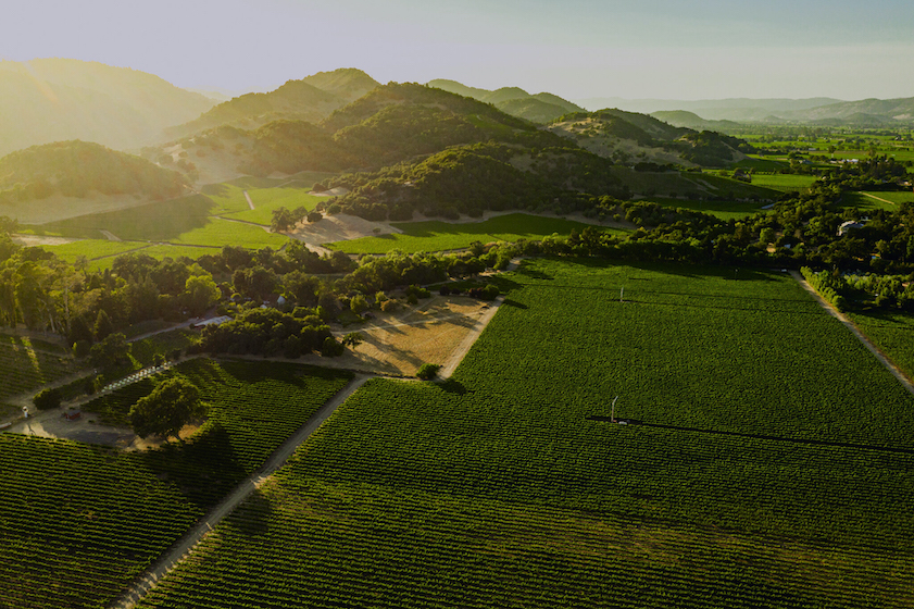 markham vineyards oak knoll vineyard aerial view